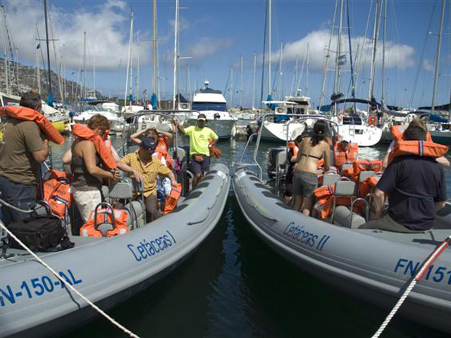 Whale & Dolphin Watching in Madeira - 5% Discount Best Price Online